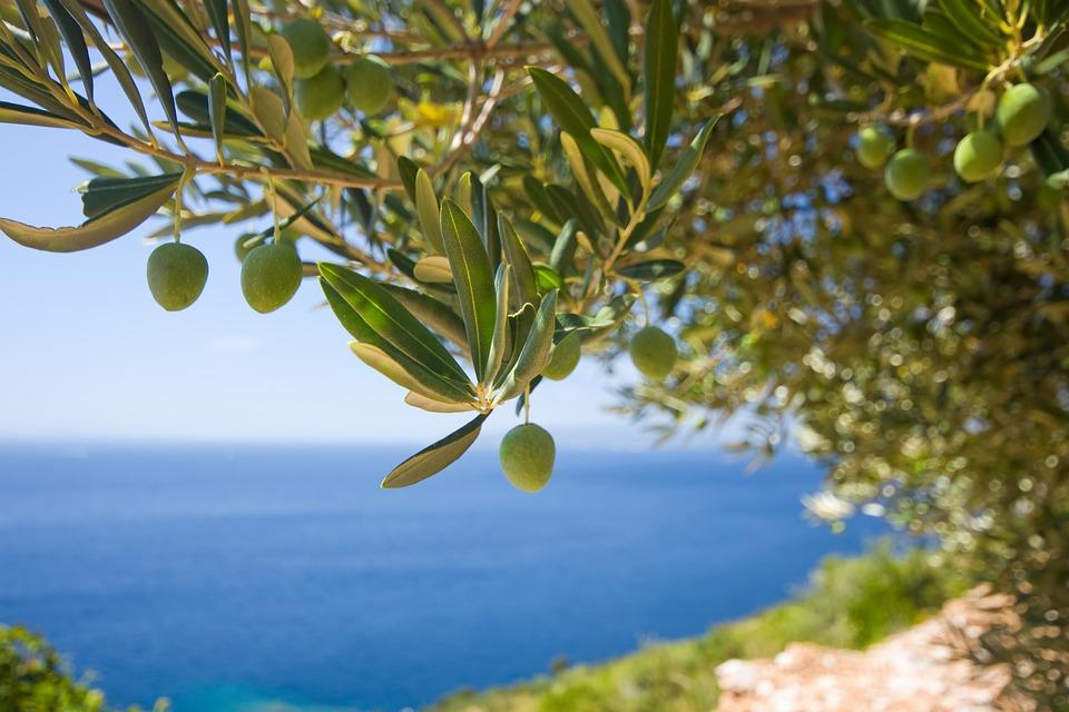 Veelgestelde vragen over olijfbomen